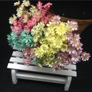Mix color Natural Dried flowers
