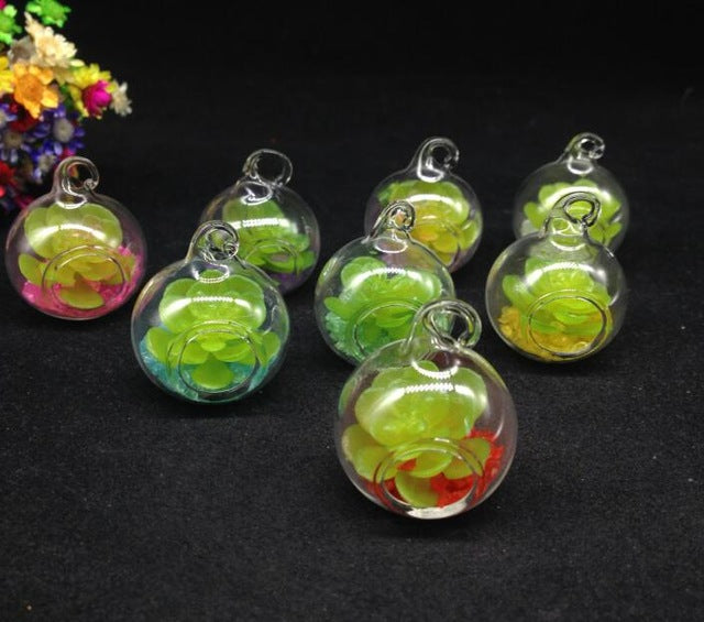 Glass Vase Terrarium Plants