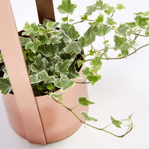 Gaia Metal Planter - Copper Electrostatic Painted Finish, Planter - Home-Buy Interiors