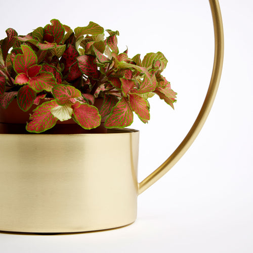 Willow Metal Planter - Gold Electrostatic Painted Finish and Handle, Planter - Home-Buy Interiors
