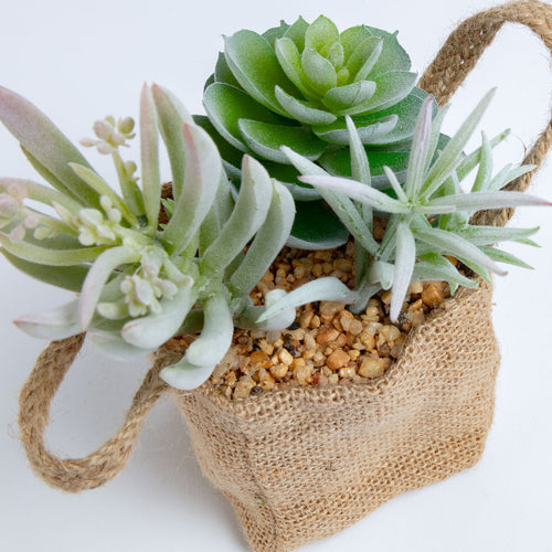 Botanic Faux Plant - Succulent in a Decorative Cloth Bag with Handles, Artificial Plant - Home-Buy Interiors