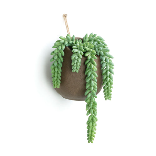 Botanic Faux Plant - Succulent in a wall hanging pot.,  - Home-Buy Interiors