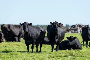 Aussie Beef | Premium Quality Black Angus Beef | Meat Delivery in Hong Kong. Find us on Localiiz, Sassy hk, & beef & liberty.  Fresh Farmers Market Meats and Meat Market HK