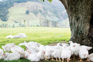 NZ Free Range Chicken Breasts (Skinless & Boneless) | Meat Delivery | Butcher | Seafood Delivery | South Stream Farmers Market