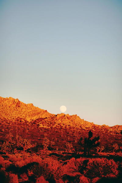 A Million Tiny Moons, Joshua Tree.