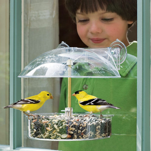 DY Winner Window Feeder