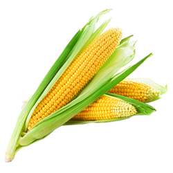 Corn on the Cob - (1 Each)