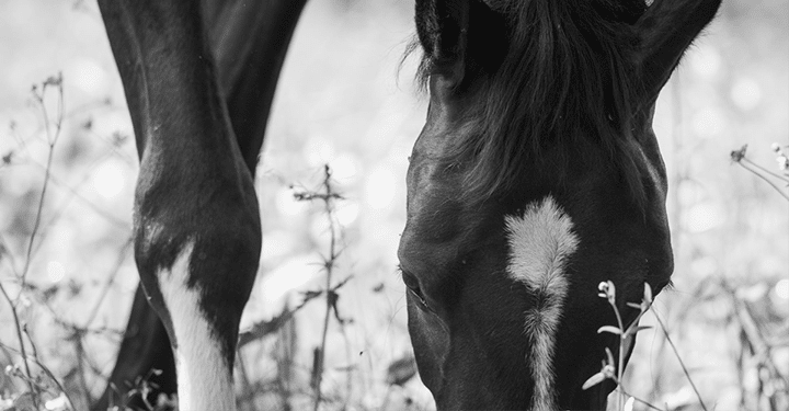 Equine Health: Turn Your Horses Out