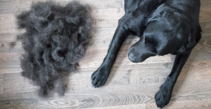 Excessive Shedding - Not the Norm!