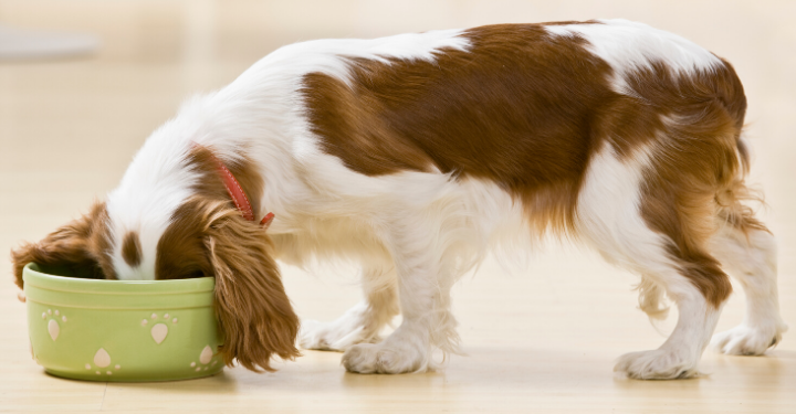 Overfed Fido? Why Isn't Your Dog Eating?