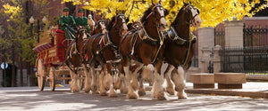 World-Famous Budweiser Clydesdales Celebrate Repeal of Prohibition with Appearance in Hoboken