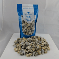 Hermit Crab Shells for Saltwater Aquarium