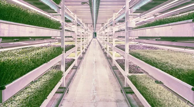 Benefits of Vertical Farming