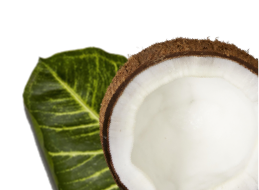 Leaf & coconut image