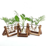 Plant Display Bulbs w/ Rustic Wooden Stand