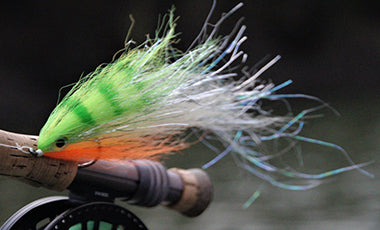 peacock bass fly gear