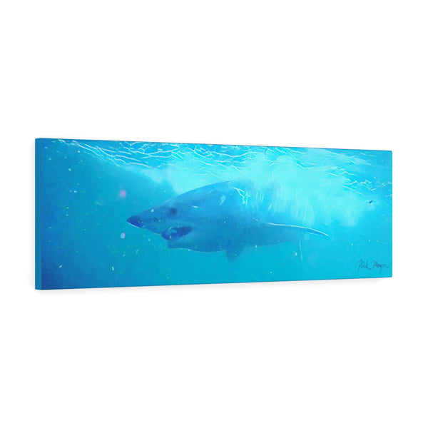 Mako Shark, Canvas Gallery Wrap, Bluewater