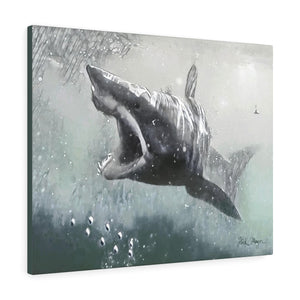 Mako Shark, Canvas Gallery Wrap, Monochrome