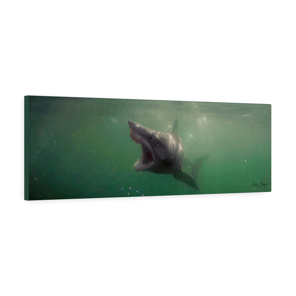 Mako Shark, Canvas Gallery Wrap, Photograph