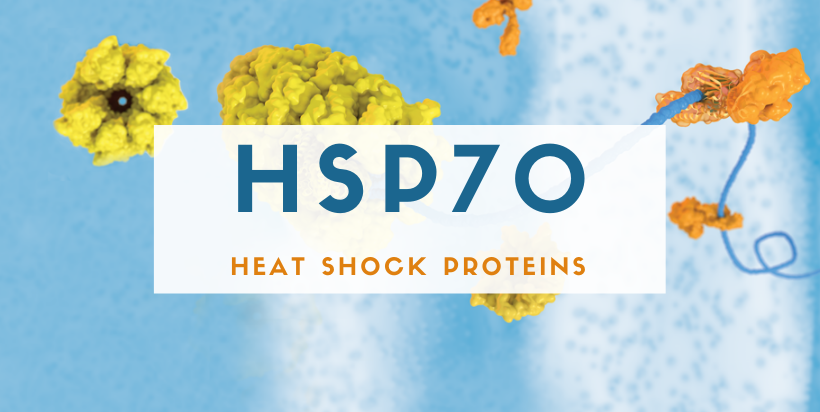 Heat Shock Protein 70 - Protect Yourself!