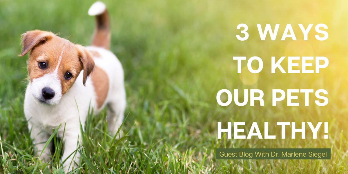 Holistic Vet, Marlene Siegel, talks Gut Health, Toxin Exposure, and Elimination!