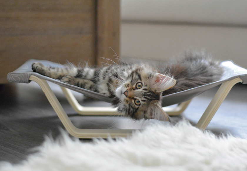 Be One Breed Cat Hammock