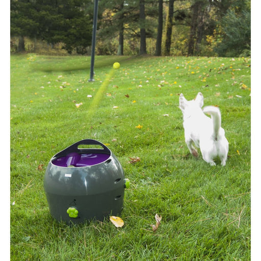 Petsafe Auto Ball Launcher
