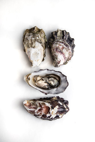 Pink Pearl Oyster
