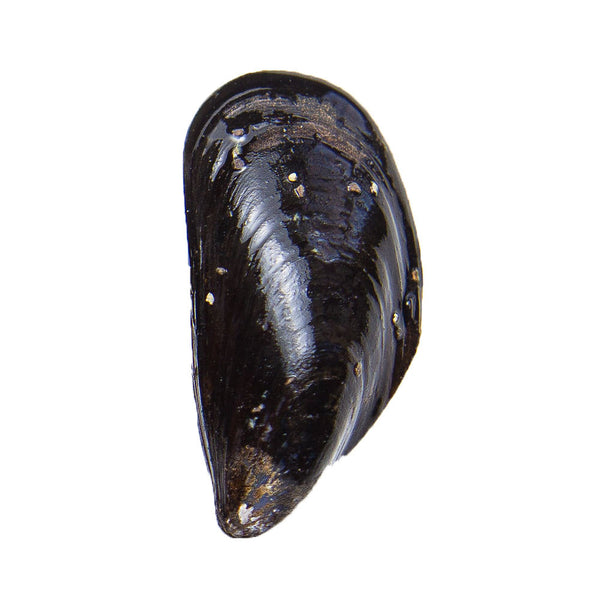 Gallo Mussels