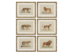 Wild Cats set of 6