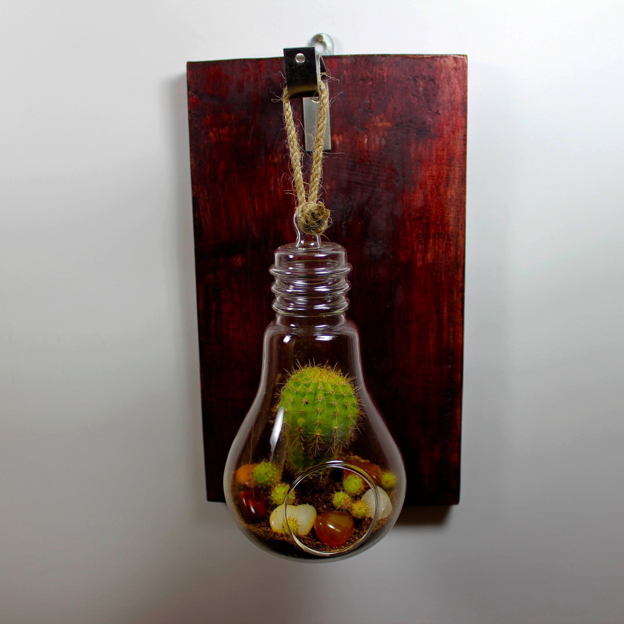Hanging Glass Terrariums For Succulents And Air Plants With Wooden