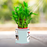Bamboo Plants, Bamboo Tree, Lucky Bamboo, Lucky Plant, Lucky Bamboo Plant, Chinese Bamboo, Indoor bamboo Plant, Lucky Bamboo Tree, Bamboo Plants Online. Buy Lucky Bamboo Online at Zestpics, Hyderabad, India