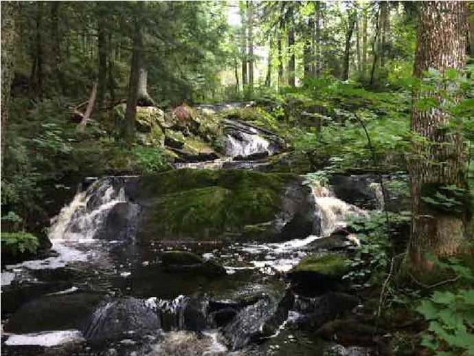 PLEASE HELP SUPPORT THIS CAUSE FOR EARTH DAY 2018 – Northwood Alliance Wildcat Falls: A Community Forest Concept