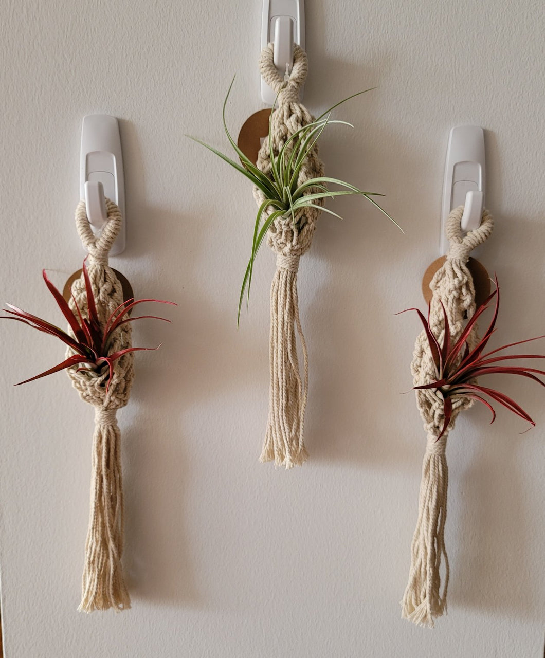 Macrame Air Plant Hanger and Plant