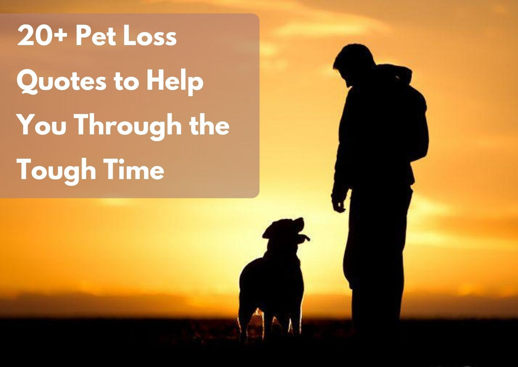 20+ Pet Loss Quotes to Help You Through the Tough Time