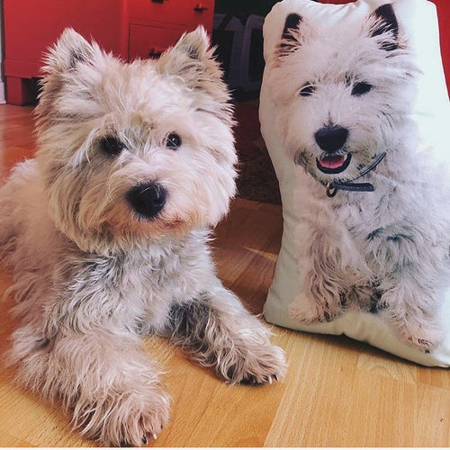 You can now get your very own customised pet pillow from GoMine