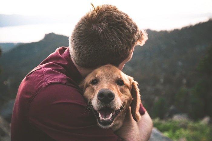 Why Do Dogs Like to Cuddle? 3 Reasons Why You Should Cuddle Your Pet Every Day?