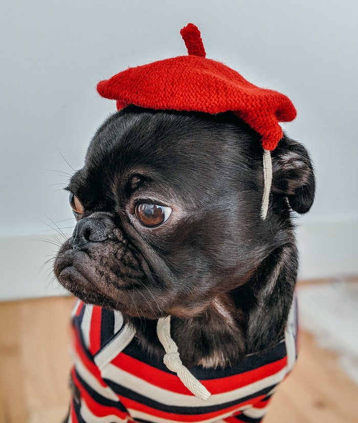 3 Best DIY Dog Costume Ideas to Turn Some Heads & Elicit A Few Aww's!