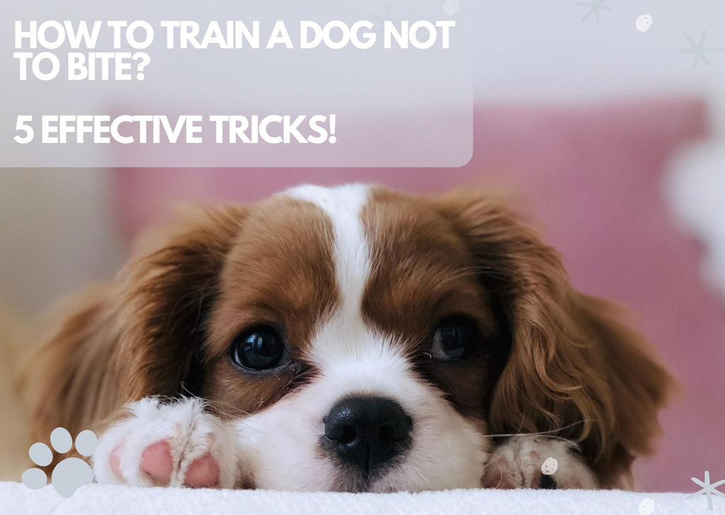 How to Train A Dog Not to Bite? 5 Effective Tricks!