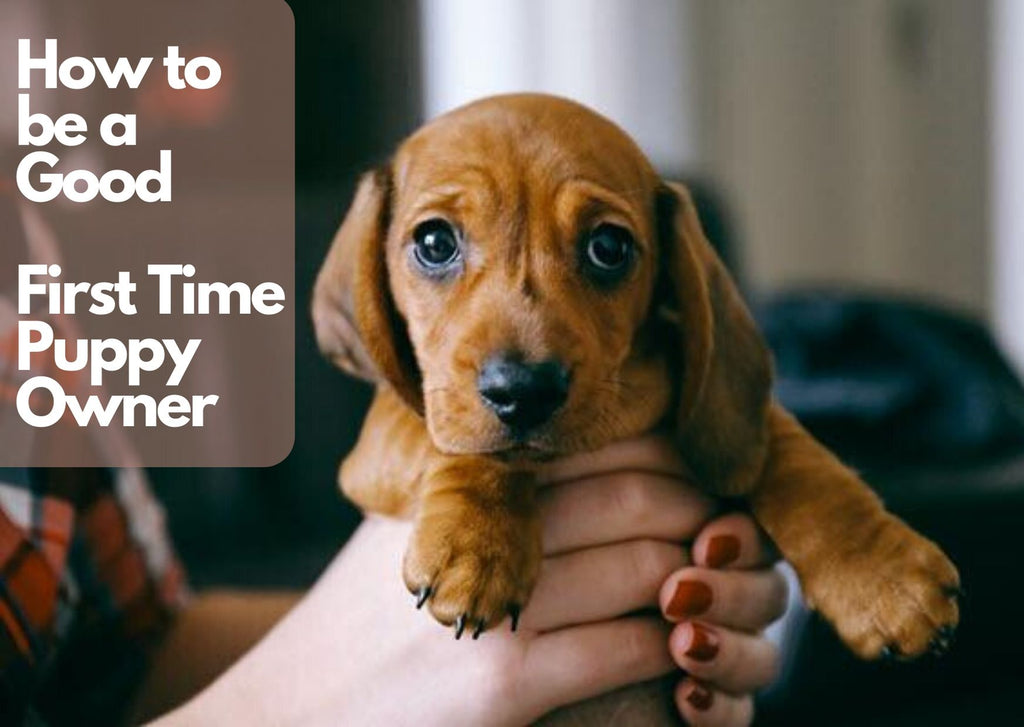 How to be a Good First Time Puppy Owner