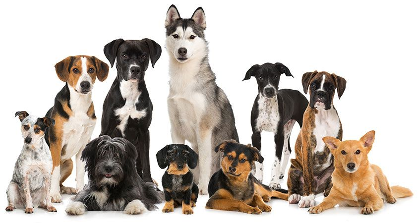 10 Best Dog Breeds to Own