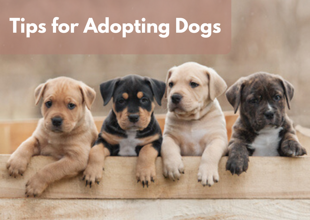 Five Tips for Adopting Dogs