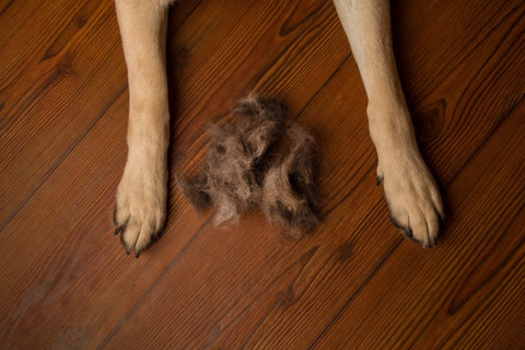 Remove Pet Hair on Hardwood floor | GoMine