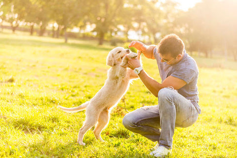 Health Benefits of Owning a Pet | Stress reduction | GoMine