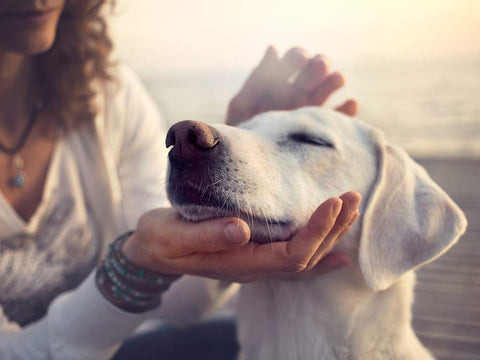 "Say ""Good boy!"" to your Dog 