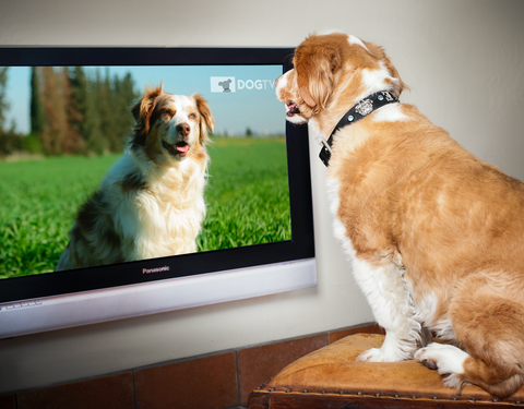 Why Does My Dog Bark at Animals on TV | GoMine