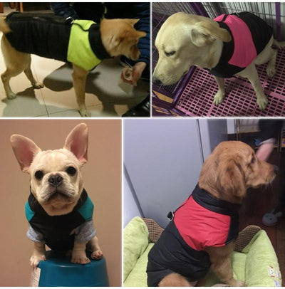 Padded Warm Waterproof Zip-up Winter Dog Jacket For Medium and Large Dogs Sizes S-5XL-Dog Coats & Jackets-DogBlabShop