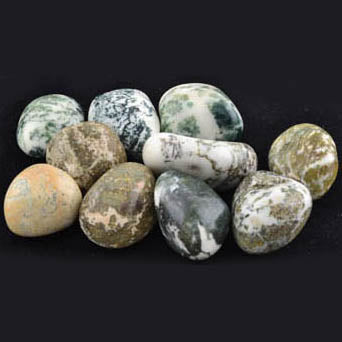 Tree Agate Tumbled Gemstones (1lb)