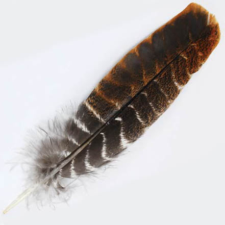 Short Turkey Wing Feather