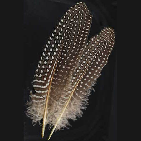 Guinea Hen Wing Feather